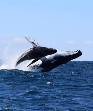5 Examples of Marine Life you Can See in Australia